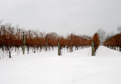 Winter Wine Making – What To Make And How To Cope